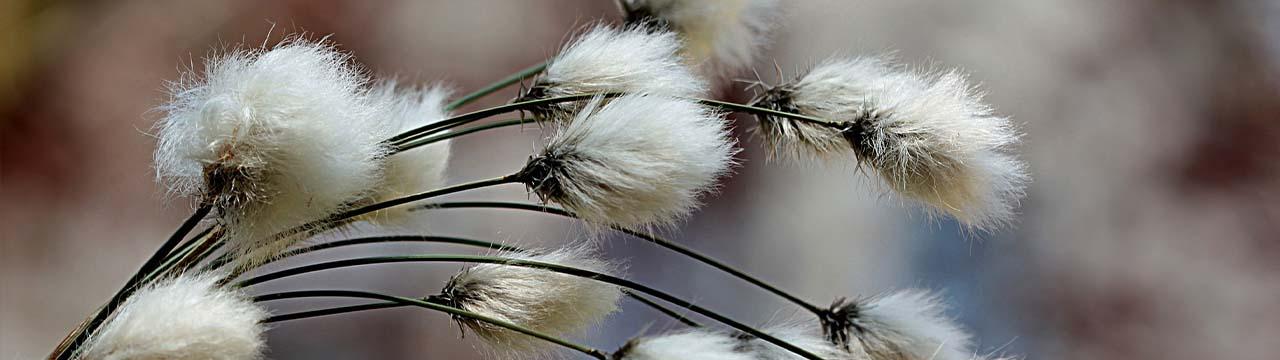 Le coton bio