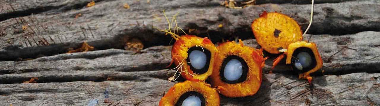 L'huile de palme RSPO