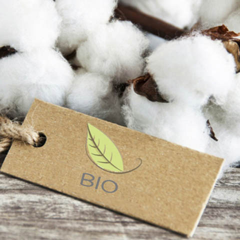 coton bio pour papate