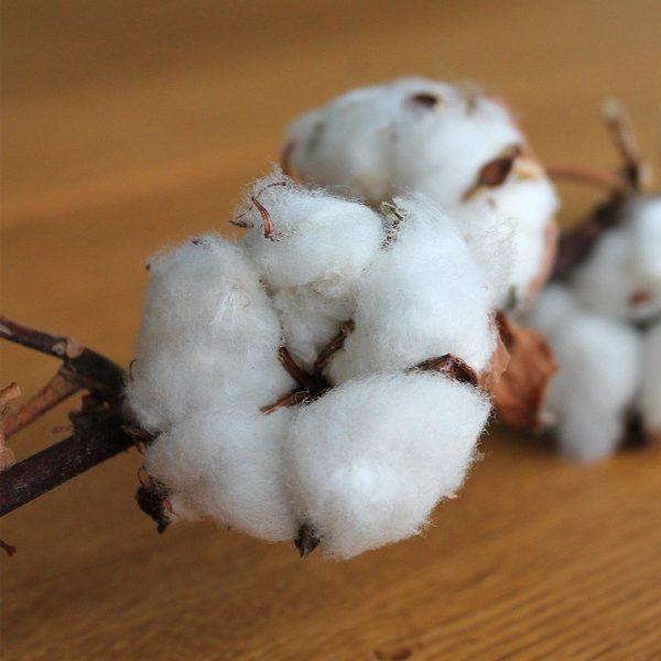 Coton pour Gigoteuse coton bio blanche made in france papate