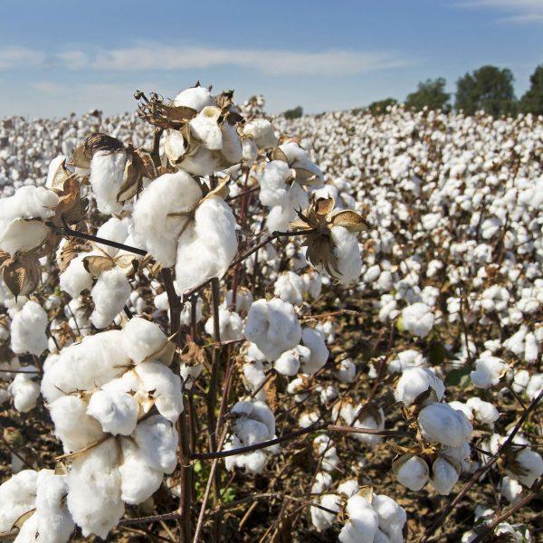 coton bio cape de bain coton bio papate lapin